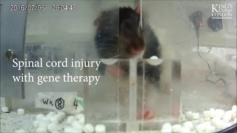 Gene therapy restores hand function