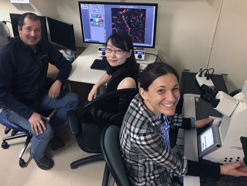 Neuroscientists at University of Alberta