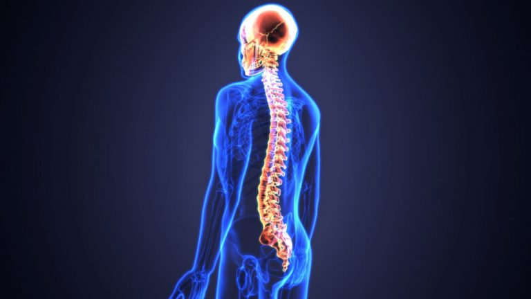 Research Identifies a Protein for Tissue Repair After the Spinal Cord Injury