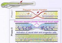 rna-regenerative-medicine