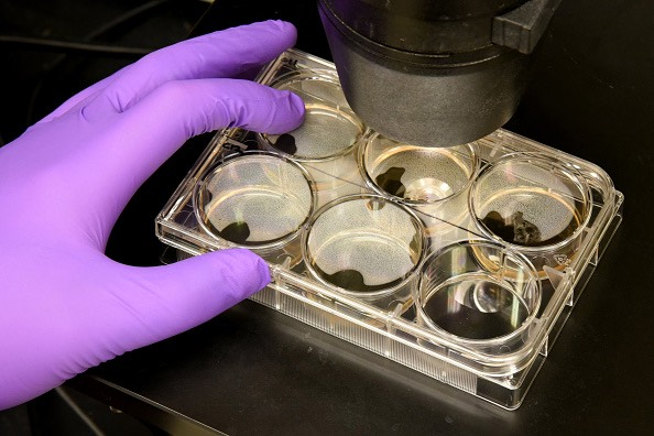 What are stem cells and how will they be used to treat the world's most debilitating diseases?
