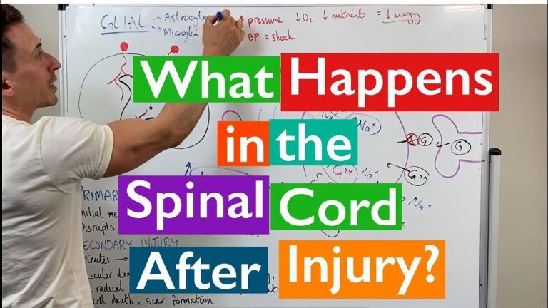What happens in the spinal cord after injury?